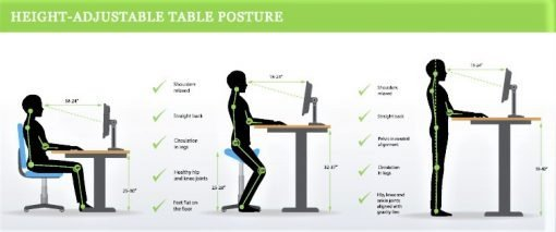 Sit Stand 3 Positions, White top electric standing desks, height adjustable.